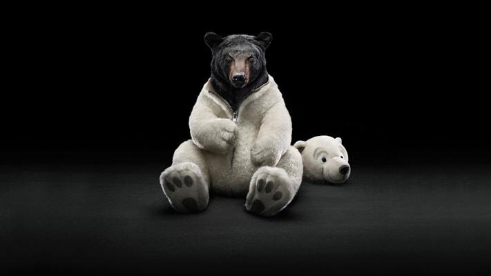 diario de trading oso