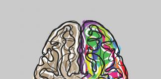 escucha a tu cerebro para sobrevivir en forex