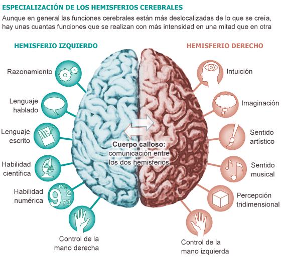 cerebro gestion del riesgo