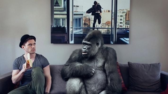 operando en forex gorila