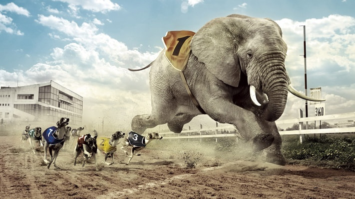 traders exitosos elefante