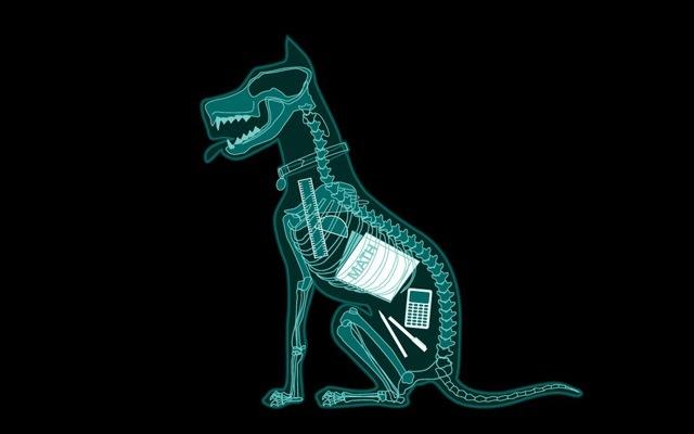 vela de indecision perro radiografia