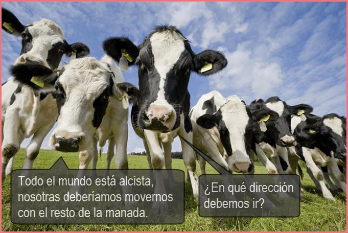 vacas errores en forex