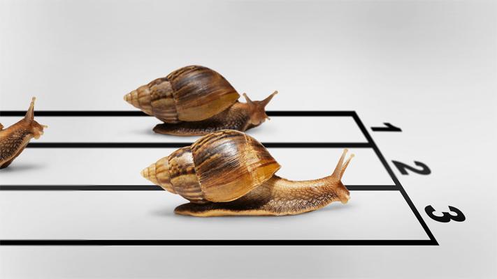 indicadores de forex lentos