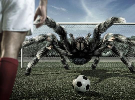 operaciones-ganadoras-en-forex-araña-futbol
