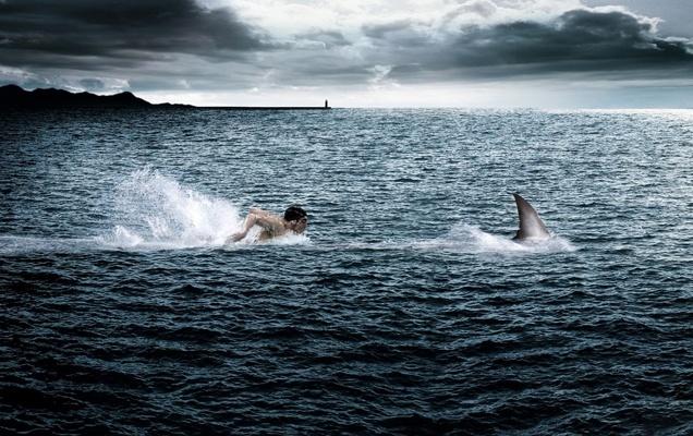 operacion-rentable-nadar-tiburon