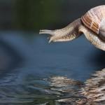 el rendimiento en forex se puede ver afectado por mercados lentos como caracoles