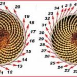 girasol y las ondas de elliott